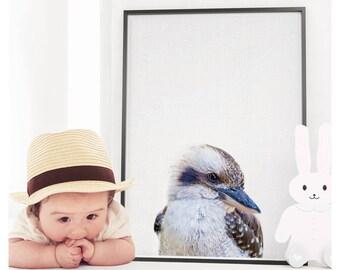 Kookaburra Print, Nursery Animals,Nursery Wall Art, Nursery Printable, Nursery Animal Print, Bird Print, Animal Print, Bird Photography