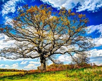 CIHA FEN TREE