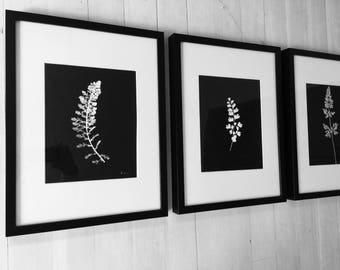 Botanical Print Set, Botanical Set of 3, set of 3 prints, American Botanical, Black Botanicals, Modern Botanicals, Christmas art gift, gifts