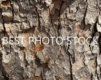 Tree Bark Background Photo Stock | Digital Image | Business Promotion