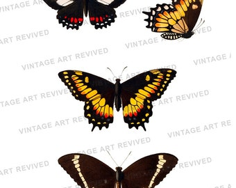 Butterfly Collage Digital Download Illustration - No.3504