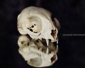 Strange and beautiful, Vulture culture Photography, Oddities Photography,Fine art prints, Art print, Wall art, Home Decor