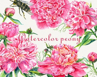 Peony clipart, Peonies flower clipart, floral elements, Watercolor, Botanical, Watercolor floral, Hand painted, Wedding invitation
