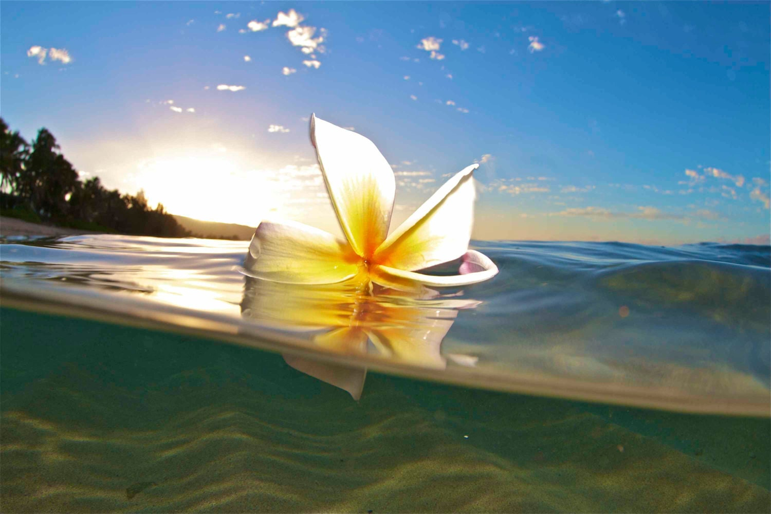 Generous white and yellow hawaiian flower ideas wedding and hawaiian water plumeria danceunderwater flower izmirmasajfo Gallery