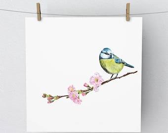 Sitting Pretty Blue Tit British Bird Mounted Print Artwork Picture