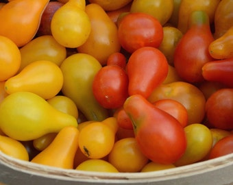 Cherry Tomato Seeds, 4 Varieties Heirloom Tomatoes, Open Pollinated Vegetables, Non GMO Seeds
