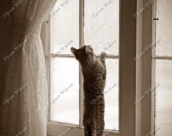 Sepia or Black & White Kitty Cat Waiting Playing in the Window Fine Art Photography Photo Print