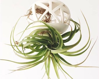 Hanging Planter Vessel for Orchids or Airplants -MINI orchid