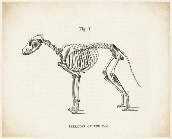 Hund Hund Bild Hund Zeichnung Skelett in Skelett Hund