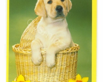 Vintage Postcard - Golden Labrador Puppy Dog in Wicker Basket - Yellow Daffodils - Vintage Animal Postcard - Original