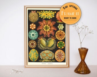 "Vintage illustration from Ernst Haeckel  - framed fine art print, sea creatures,sea life, 8""x10"" ; 11""x14"", FREE SHIPPING - 299"