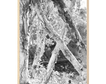 PAPERBARK FOREST II black and white photography wall art print