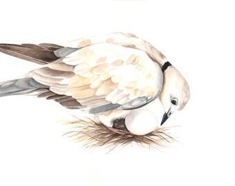Dove Painting - Bird watercolor art - Print of watercolor painting 5 by 7 print wall art print - bird art print