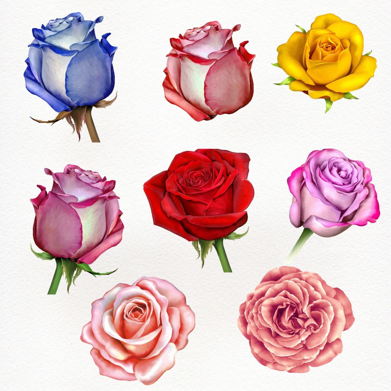 Watercolor Rose Clipart, Rose Clipart, Watercolor Flower Clipart ...