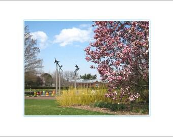 Magnolia View towards Linnaean House, MO Botanical Garden