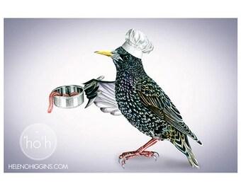 Michelin Starling Chef - Art Print - Wall Art - Digital - Painting - Birds - Ireland - Irish
