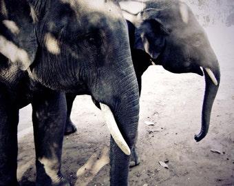 Elephants of Thailand, Chiang Mai, 8x10