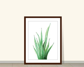Succulents Painting, Print of Sansevieria Drawing, Snakeplant, Green Plant Illustration, Minimalist Succulent Wall Art, Botanical Wall Decor