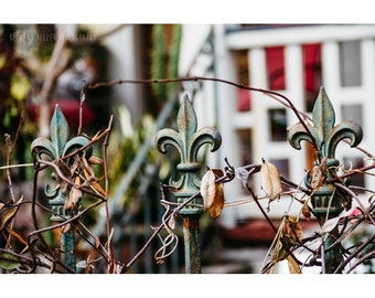 New Orleans French Quarter Photography Marigny NOLa Art Architecture Photography Fleur de Lis Fence Rustic Decor Red Green Wall Art