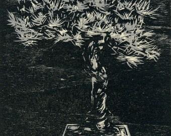 Bonsai - Original Woodcut Print