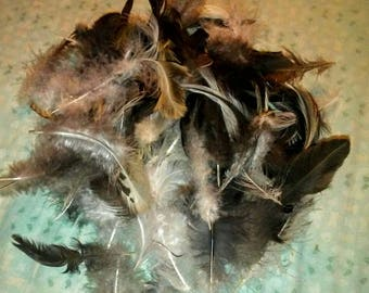 Lot of Natural Molt Rooster Tail Feathers- Crafts, Jewelry, Fly Tying