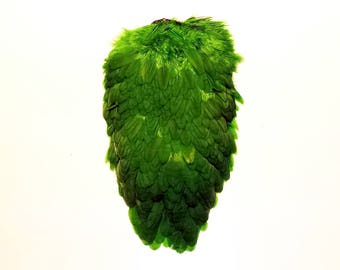 Hen Saddle Feathers - Green