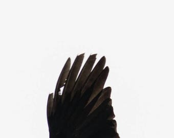 Crow Wing Black Bird Art Abstract White space Minimalist Decore Art Photography by Sarah McTernen