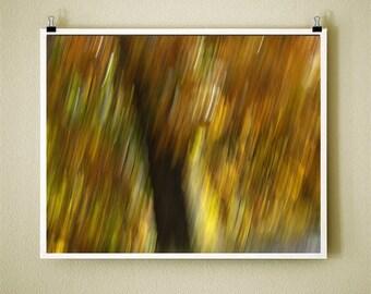 GOLDEN TREE - 8x10 Signed Fine Art Photograph