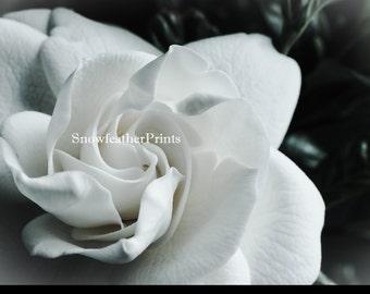 Gardenia in Black and White - Ships Free