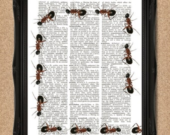 Marching Ants Print Insect Dictionary Book Page Art A078