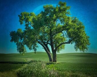 Printable Wall Art, Photo arbre, arbre Clipart, téléchargement numérique, Decor imprimable, Photo de paysage, carré Wall Art, arbre Art, Art de la Nature