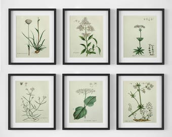 White Flower Print Set, Botanical Print Set of 6, Botanical Wall Art, Vintage Botanical Prints, Antique Floral Art, Botanical Illustrations