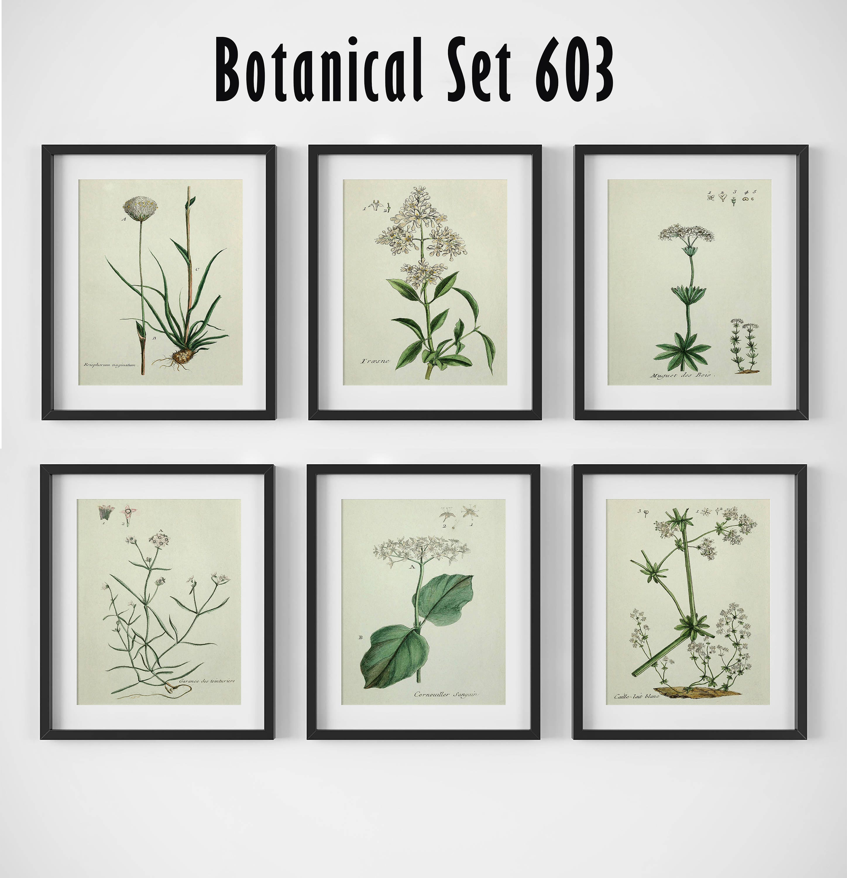 Picture By Picture Designs  sc 1 st  Picture By Picture Designs & White Flower Print Set Botanical Print Set of 6 Botanical Wall Art ...