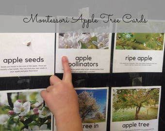 Montessori Apple Cards for Homeschool Nature Study