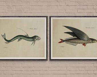 Fish Print Set of 2, flying fish print, fish art, fish wall art, antique print, kitchen art, kitchen wall art, kitchen decor, nautical decor