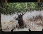 Glass Cutting Board - Elk Sitting 7.75in  x 10.75in