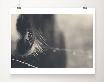 SALE horse photograph animal photography black and white photography equine photograph horse print set equestrian photograph horse print