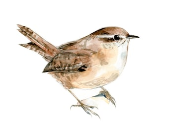 Carolina Wren watercolor painting - bird watercolor painting - 5x7 inch print - 0005