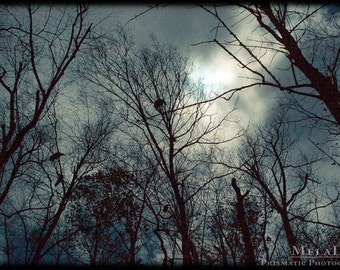 Birds in The Trees, Taurus/Scorpio Full Moon, November, Samhain, Witches, Pagan wall art, Birds on boughs, Tree tops, Night Photography
