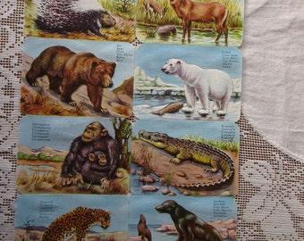EAS Vintage Germany Animals Lithographed Die Cut Paper Scraps  EAS 3113