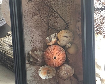One of a kind Mini Sealife Menagerie framed in Espresso Wood Shadowbox
