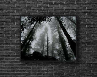 Forest Photo - Woodland Photo - Paper Photo Print - Nature Photo Print - Black and White - Forest Wall Art - Wall Decor - Living Room Decor