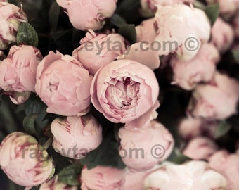 Flower Photography, Peony Art, Pink, Pastel, Nature Photography, Peonies