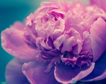 "Flower Photography, Romance, Paris Photography, Home Decor, Peony, Botanical Art Print, Peonies, Nature Photography, ""Peony in Soft Light"""