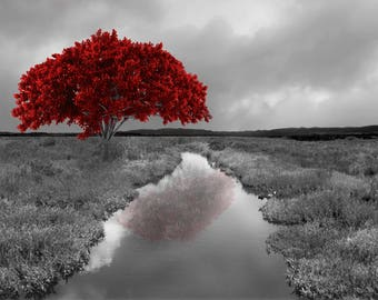 Black White Red Wall Pictures, Tree Landscape, Modern Red Gray Home Decor Matted Wall Art Picture