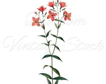 Botanical Printable INSTANT DOWNLOAD Pink Flowers, Botanical Digital Illustration for Print, Artwork, Collage - Digital Image - 1539