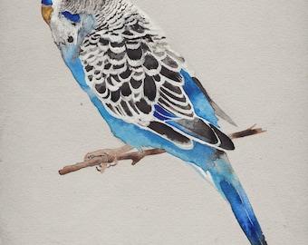 Blue Parakeet Print - Budgie Art - Bird Watercolor Painting - Giclee Print - Canvas