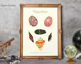 Coastal Decor Idea, Grandpa Gift Print, Cottage Art Print, Home Shell Prints, Mollusk Art Posters, Seashells Art Decor - E5g58
