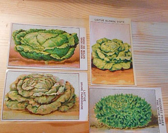 4 SEED PACKET Labels Veggie Salad Bowl Greens Lettuce Cabbage Chickory 1920 French Art, Vibrant Litho Paper Color Cards Collage Journal v2