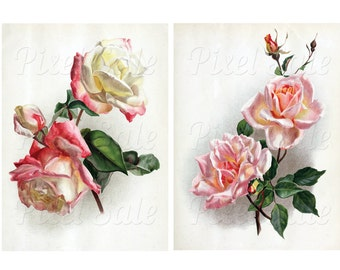 ROSES instant download, wedding clipart, digital flowers, white pink rose JPG digital download no.021